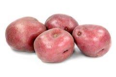 Pommes de terre rouges. Photos libres de droits