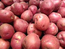 Pommes de terre rouges de Pontiac à vendre Photo libre de droits