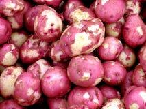 Pommes de terre rouges neuves Images libres de droits