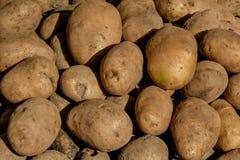 Pommes de terre sous la lumière du soleil Image libre de droits
