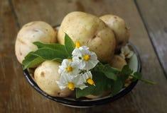 Pommes de terre sur une table en bois Photographie stock libre de droits