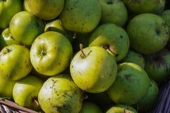 Pommes de ventis rassemblées ensemble avant d'être nettoyé Image libre de droits