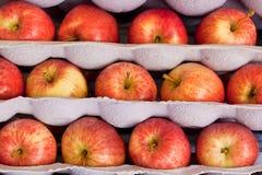 Pommes empilées dans des plateaux d'expédition Photographie stock libre de droits