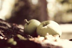 Pommes en automne Images stock