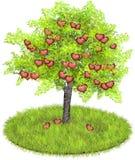 Pommes en forme de coeur dans un pommier Photo stock