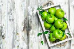 Pommes entières juteuses vertes dans une boîte en bois photos stock