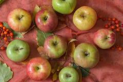 Pommes et baies de cendre de montagne Photographie stock