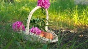 Pommes et fleurs organiques dans le panier dans l'herbe d'été Fruit frais et fleurs en nature banque de vidéos