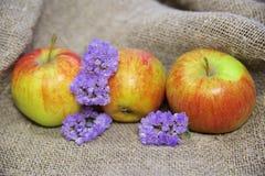Pommes et fleurs sur le fond de la toile photos libres de droits