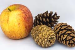 Pommes et pinecones sur un fond blanc Photographie stock