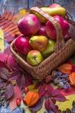Pommes et poires organiques fraîchement sélectionnées dans le panier avec des feuilles d'automne sur un fond en bois image libre de droits