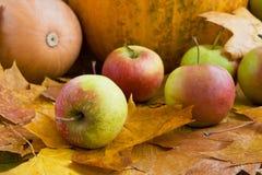 Pommes et potirons d'automne Photos libres de droits