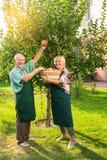 Pommes et sourire de cueillette de couples Photo stock