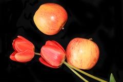 Pommes et tulipe sur un plan rapproch? noir de fond, foyer s?lectif image libre de droits