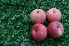 pommes fermé aux pommes sur le fond vert Images libres de droits