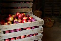 Pommes fraîches photo stock