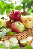 Pommes fraîches Photos stock