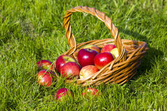 Pommes fraîches dans un panier Images libres de droits