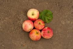 Pommes fraîches de jardin Photos stock