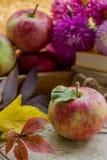 Pommes fraîches en automne Pommes avec le pollen sur la peau Images libres de droits