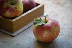 Pommes fraîches en automne Pommes avec le pollen sur la peau Image stock