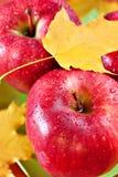 Pommes fraîches rouges Photo stock