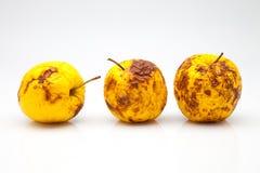 Pommes jaunes Photographie stock