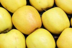 Pommes jaunes Photos stock