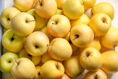 Pommes jaunes mûres savoureuses Image stock