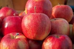 Pommes juteuses fraîches Delicious photo libre de droits
