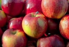 Pommes juteuses fraîches Delicious sur le marché de fruit local photo stock