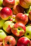 Pommes mûres Photo libre de droits