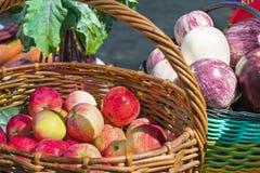 Pommes mûres dans un panier, la récolte dans le jardin image libre de droits