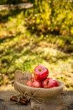 Pommes mûres juteuses dans un panier sur un fond naturel naturel Pommes organiques rouges Image stock
