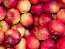 Pommes mûres rouges Photos libres de droits