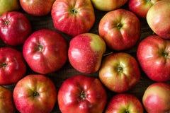 Pommes mûres rouges Images libres de droits
