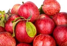 Pommes mûres rouges avec les lames vertes Images libres de droits