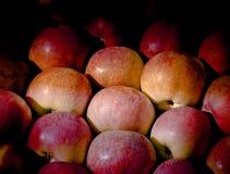 Pommes mûres subtilement illuminées Image libre de droits