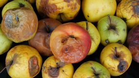 Pommes mûries corrompues putréfiées multicolores sur le fond noir clips vidéos