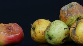 Pommes mûries corrompues putréfiées multicolores sur le fond noir banque de vidéos