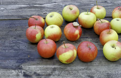 Pommes mûres Photos stock