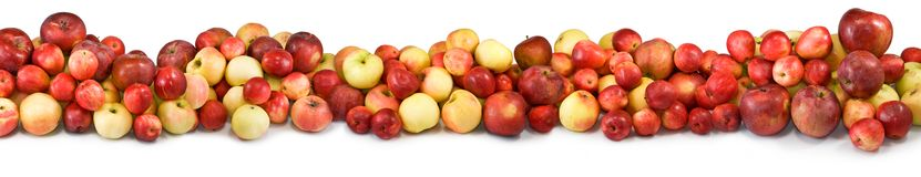 Pommes mûres Image stock