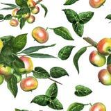 Pommes mûres douces Photo libre de droits