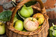 Pommes organiques dans la caisse Frais en nature Images libres de droits