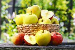 Pommes organiques dans le jardin Régime équilibré Photo stock