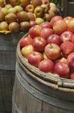 Pommes organiques dans un baril Photo stock