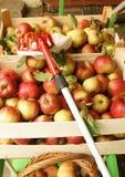Pommes organiques fraîches, nourriture saine pour des enfants photographie stock