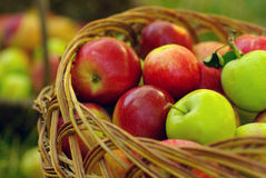 Pommes organiques saines dans le panier. Photo libre de droits
