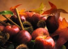 Pommes pendant l'automne Image stock