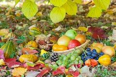 Pommes, poires, raisins et potirons photographie stock libre de droits